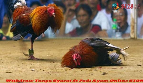 Withdraw Tanpa Syarat di Judi Ayam Online S128